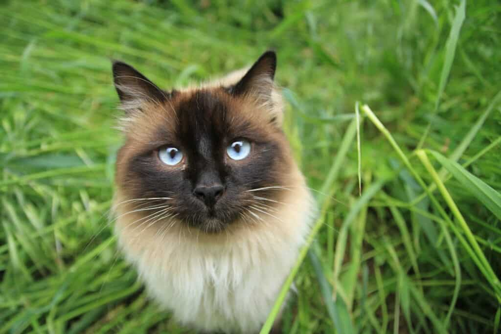 Pet photography empoli
