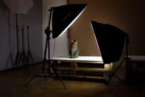 Pet photography in studio