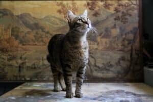 Pet photography a casa tua